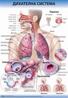 Табло Дихателна система на човека 70 х 100 см